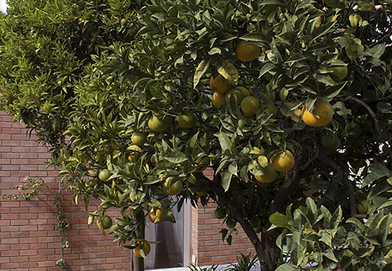 Limoeiro do jardim do apartamento para uma estadia em Lisboa